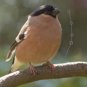 GIMPで画像を痩せさせたり太らせたりする02