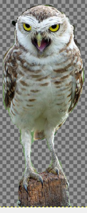 GIMPで前景抽出10