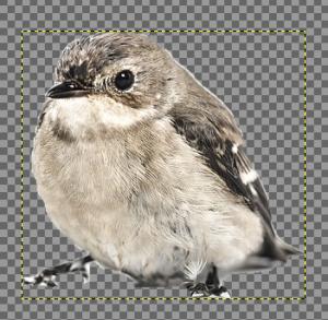 GIMPで電脳はさみを使う07