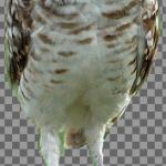 GIMPの前景抽出選択ツールで切り抜きする方法